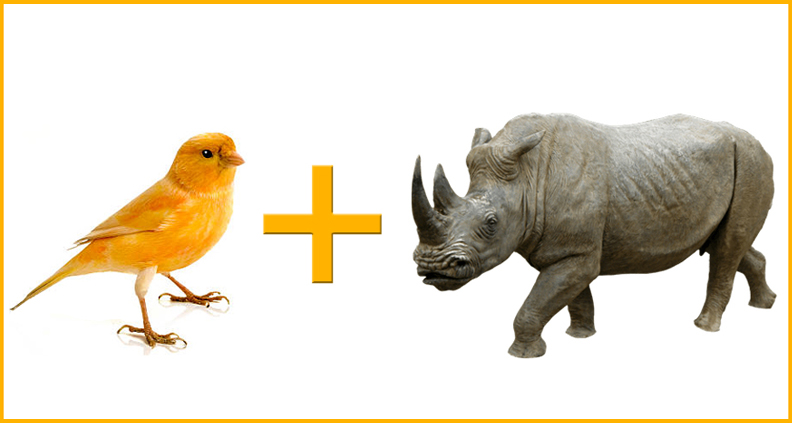 Canary Marketing & Rhino Digital Printing