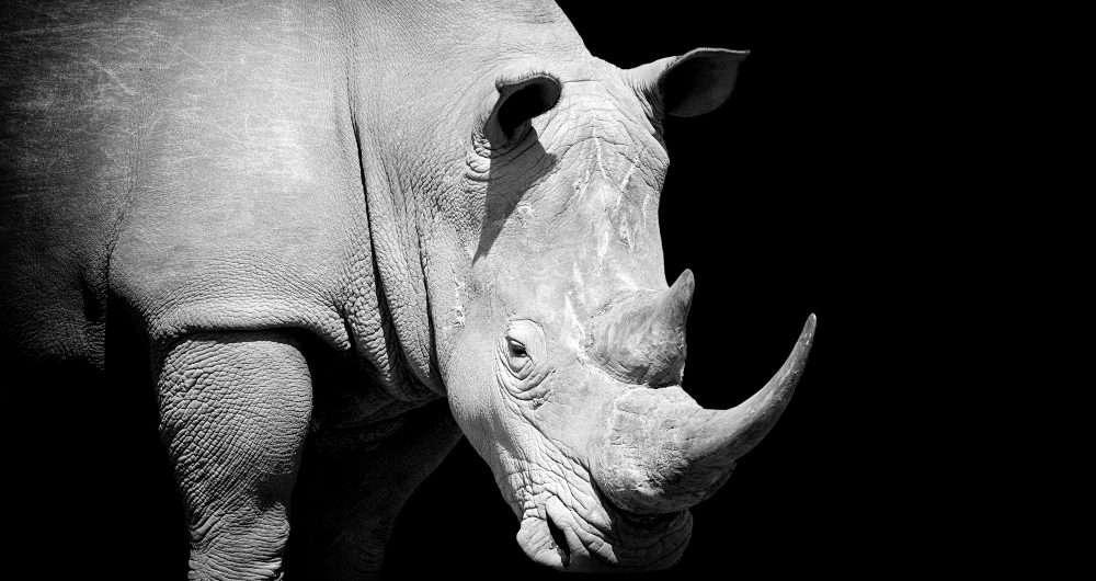Rhino african homepage image