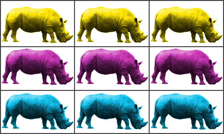 Pic of recurring rhinos