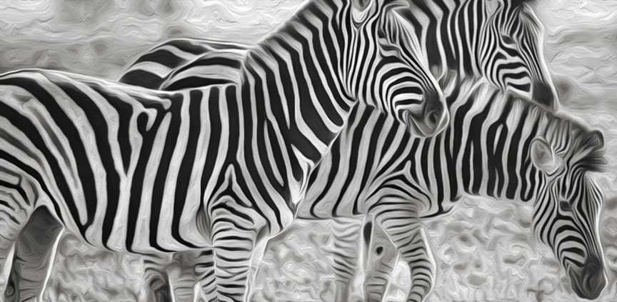 photo of zebras
